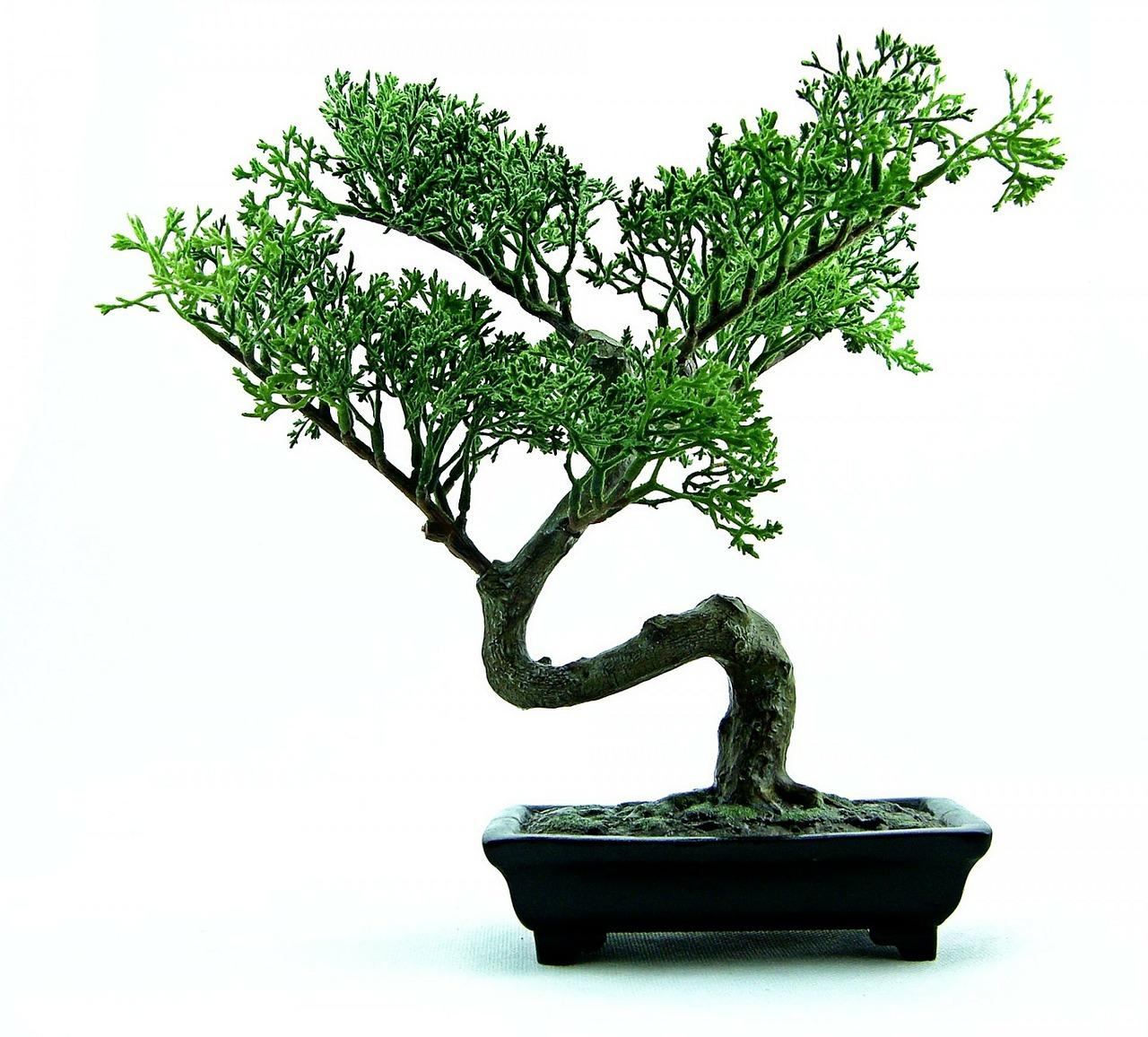bonsai-316573_1280